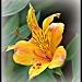 mellow yellow by mjmaven
