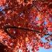 Ahhh — Autumn Ablaze! by rhoing