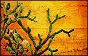 27th Oct 2011 - Arizona - the Cactus State