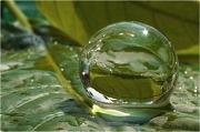 8th May 2010 - Crystal Ball, Save Us All