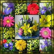 29th Oct 2011 - Flowers for Me