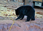28th Oct 2011 - So, uh, what does this yellow cord do?