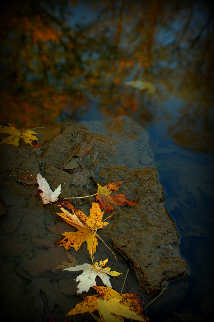 Touched By Fall by digitalrn