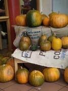 29th Oct 2011 - Pumpkins.