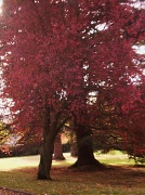 31st Oct 2011 - Shades of Autumn.