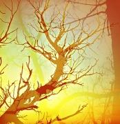 30th Oct 2011 - Spooky tree