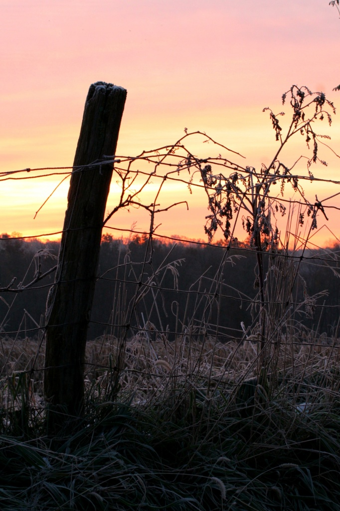 Brisk Morning  by digitalrn