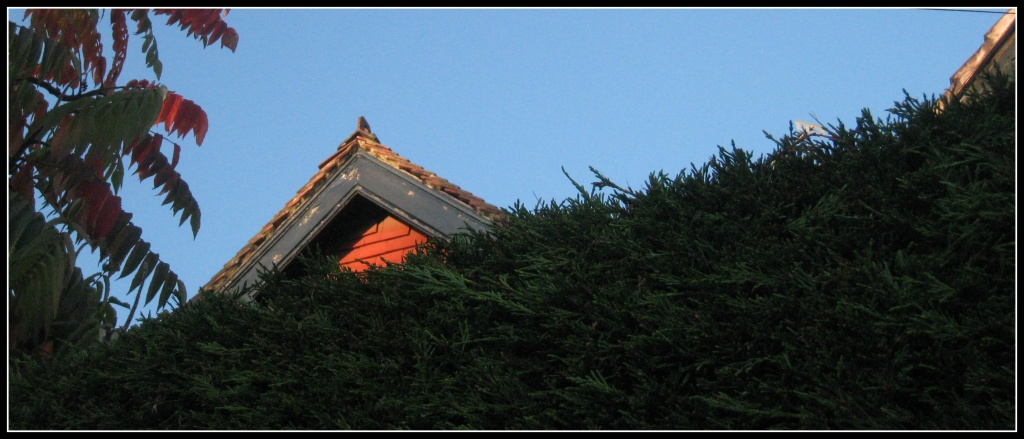 Growing hedge, peeping rooftop by sarahhorsfall