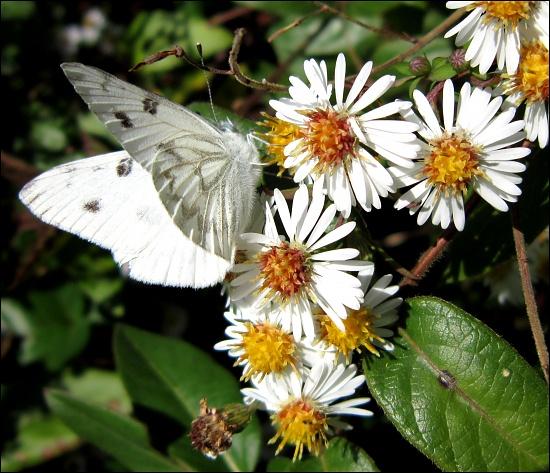 Flutter by cjwhite