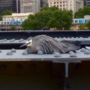 2nd Nov 2011 - Bird