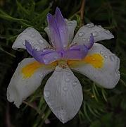 4th Nov 2011 - Square flower