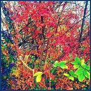 2nd Nov 2011 - Leaves