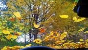 1st Nov 2011 - Fallen leaves