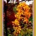 Golden Tree by vernabeth