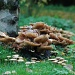 Mushrooms by parisouailleurs