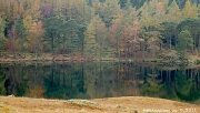 5th Nov 2011 - Blea Tarn - The Lake District - and a decision...