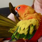 6th Nov 2011 - Preening parrots