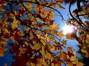 6th Nov 2011 - Light Play