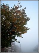 4th Nov 2011 - Tree in November - foggy morning