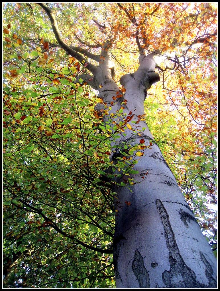 Autumnal tree by sarahhorsfall