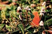 6th Nov 2011 - Teeny tiny mushrooms.