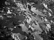 6th Nov 2011 - Black and White Maple Leaves 11.6.11