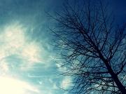 7th Nov 2011 - Windswept