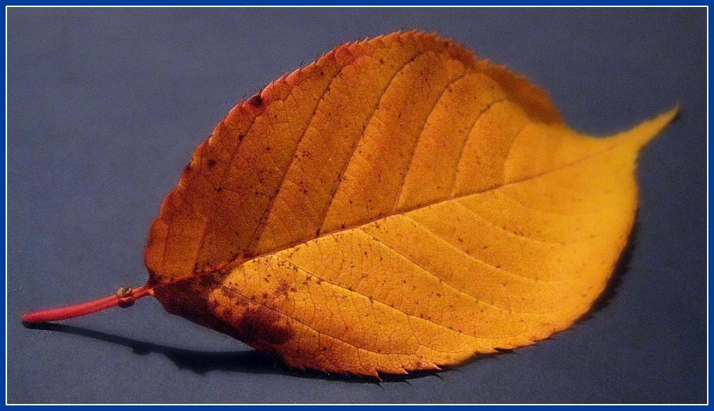 Autumnal leaf by sarahhorsfall