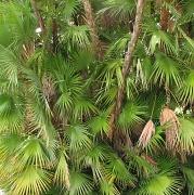 9th Nov 2011 - Leafy textures