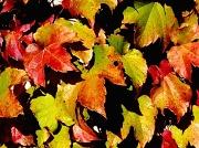 11th Nov 2011 - My True Colors