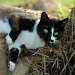The cat who loves manure by parisouailleurs