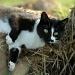 The cat who loves manure by parisouailleurs