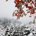 Winter wonderland by kiwichick