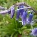 Some kind of flower by manek43509