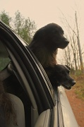 13th Nov 2011 - Are we there yet?