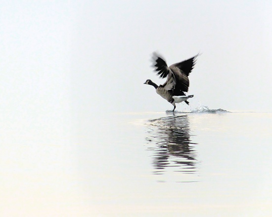 Walking on water. by maggie2