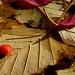 Leaf Landing by denisedaly