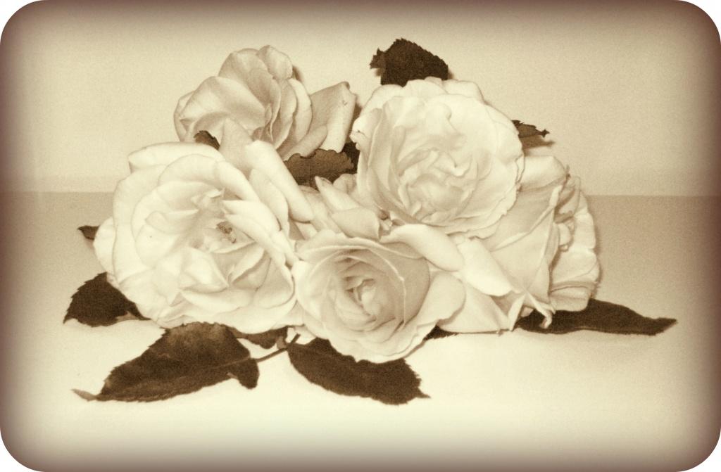 Olde Roses by filsie65