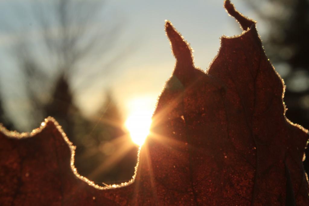 Frosty sunrise by mandyj92