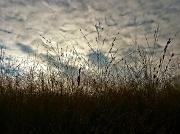 18th Nov 2011 - Nature's Canvas