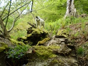 11th May 2010 - Woods at Croft castle.Doggy heaven !