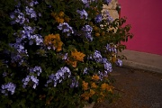 6th May 2010 - Riot of Colour