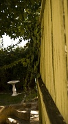 7th May 2010 - Garden Fence