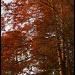Cypress by eudora