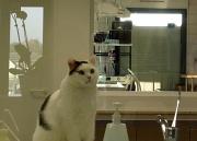 19th Nov 2011 - Just for fun: The vet's cat