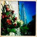 Flowers at the Shard by andycoleborn