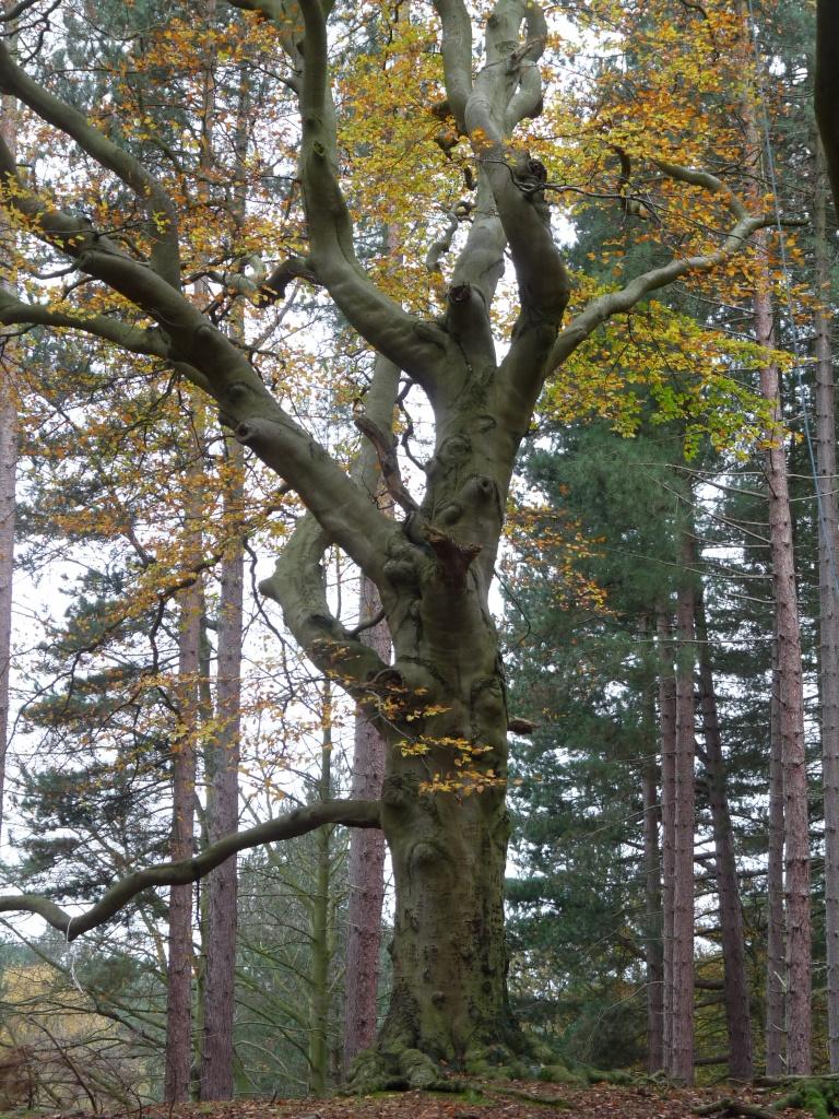 Dancing tree by sabresun