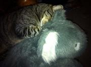 18th Nov 2011 - Sleepyhead
