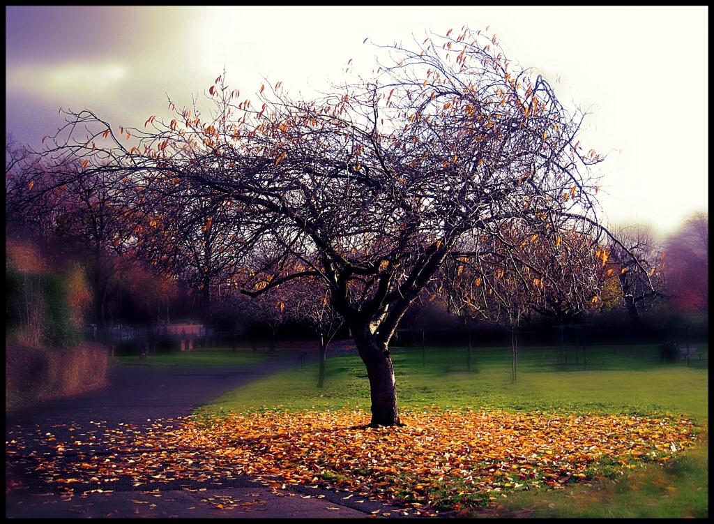 Autumn leaves by sarahhorsfall