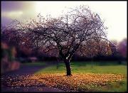 20th Nov 2011 - Autumn leaves